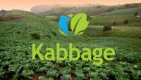 Kabbage looking to expand patch