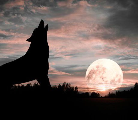 """Confronting """"the wolf"""" with ALCO"""